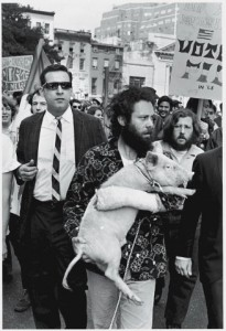 Пігасус, свиня-кандидат на виборах в США 1968 року. З тих часів небагато змінилося